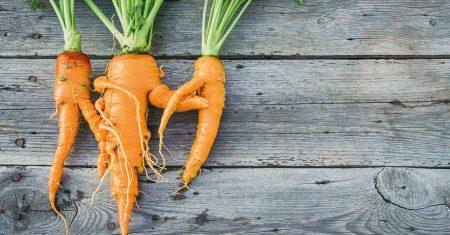 Eine Chance für schräges Gemüse: Nichts wird weggeworfen, alles wird verarbeitet.