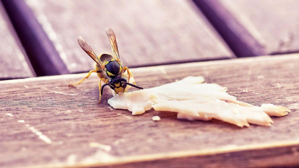 5 Tipps, wie Sie Wespen von Ihren Gästen fernhalten können.